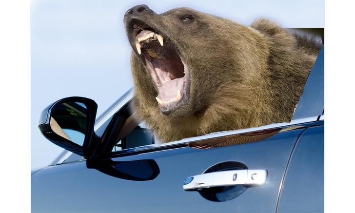 Фото №1 - Как выглядит машина после того, как в нее залез медведь (видео)