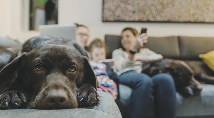 Не считая собаки: как наши питомцы переживают карантин