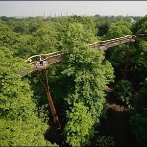 Фото №1 - Прогулка по деревьям
