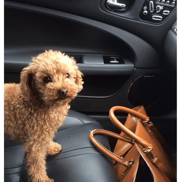 Фото №25 - Звездный Instagram: Селфи в машине