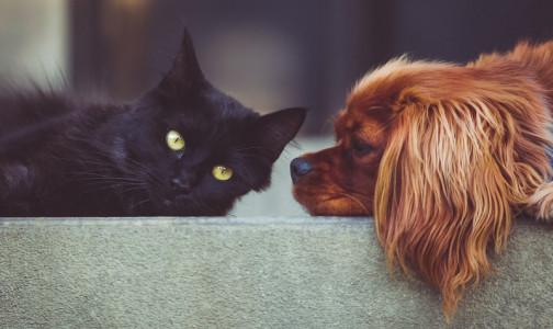 Фото №1 - Нужно ли прививать от коронавируса домашних животных? Отвечает ветеринарный врач