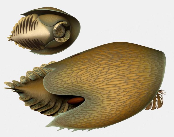 Фото №1 - В честь корабля Хана Соло назвали доисторического хищника