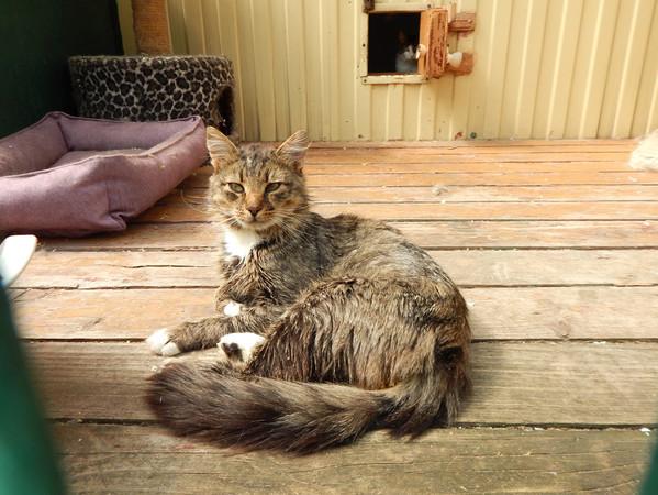Фото №2 - Котопёс недели: кот Атаман и пёс Сочник