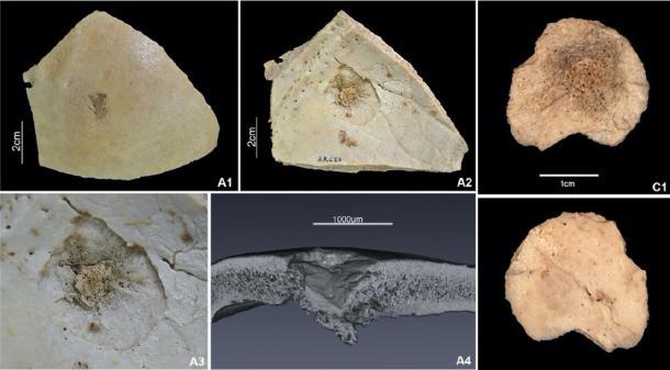 Фото №1 - В Испании обнаружены свидетельства жестокости каменного века