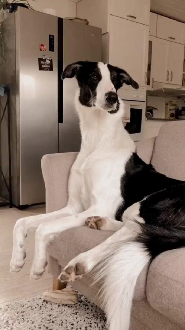 Фото №3 - Реальные собаки, которые выглядят как плохой фотошоп (много фото)