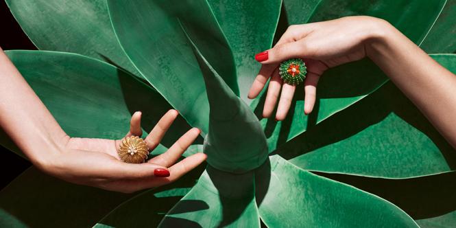 Фото №1 - Цветы пустыни: новая коллекция Cactus de Cartier