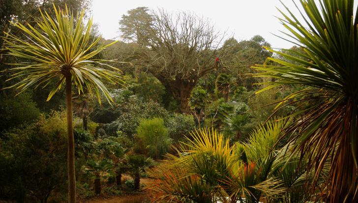 Фото №5 - Секретные миры: 7 таинственных британских садов