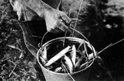 Фото №4 - Рыбалка в Тишкове