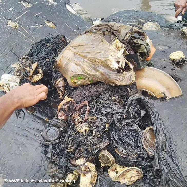 Фото №1 - Экологов шокировало содержание желудка кашалота