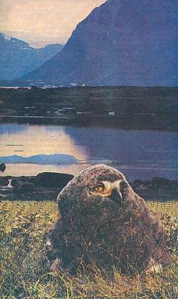 Фото №1 - На острове полуночного солнца