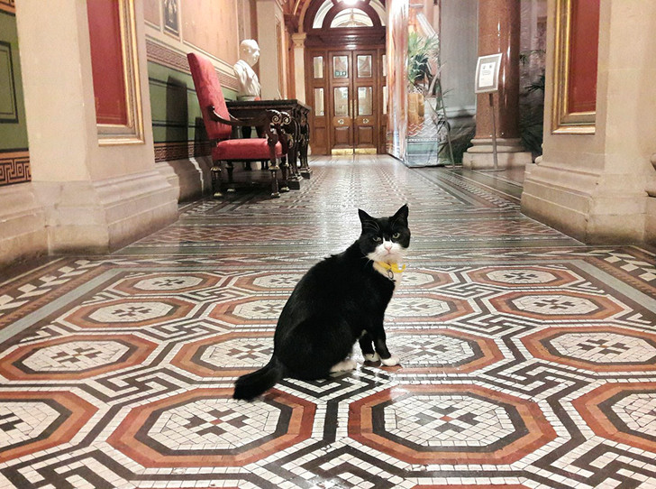 Фото №6 - Коты на службе Ее Величества