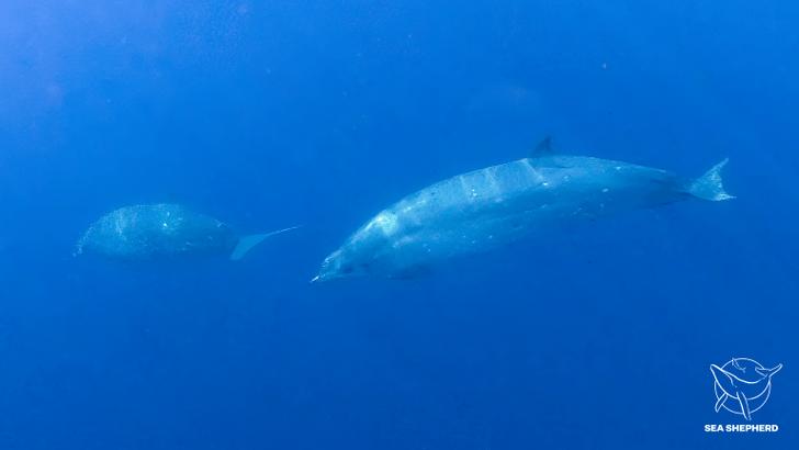 Фото №1 - У берегов Мексики обнаружили новый вид китов