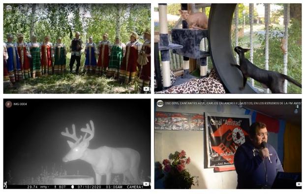 Фото №1 - Сайт дня: подборка роликов с нулем просмотров на YouTube