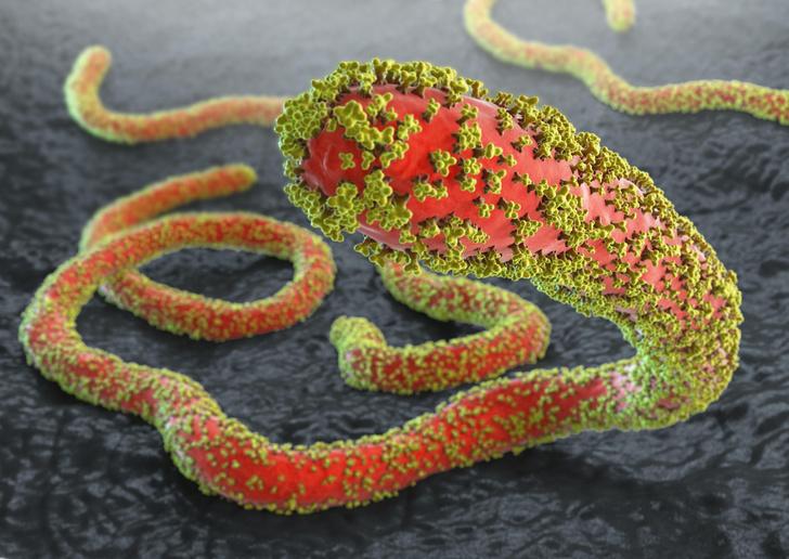 Фото №1 - Ученые обнаружили переносчика вируса Эбола