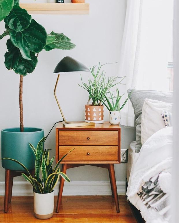 Фото №2 - Лучшие растения для спальни: советы по выбору и уходу