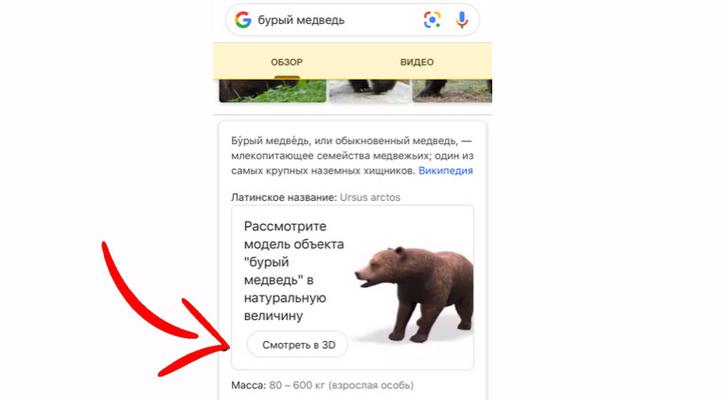 Фото №2 - Залипательное развлечение от Google: трехмерное животное прямо у тебя дома