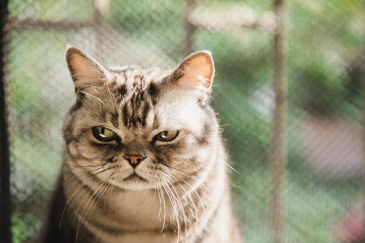 Фото №1 - 12 вещей, которые раздражают твоего кота