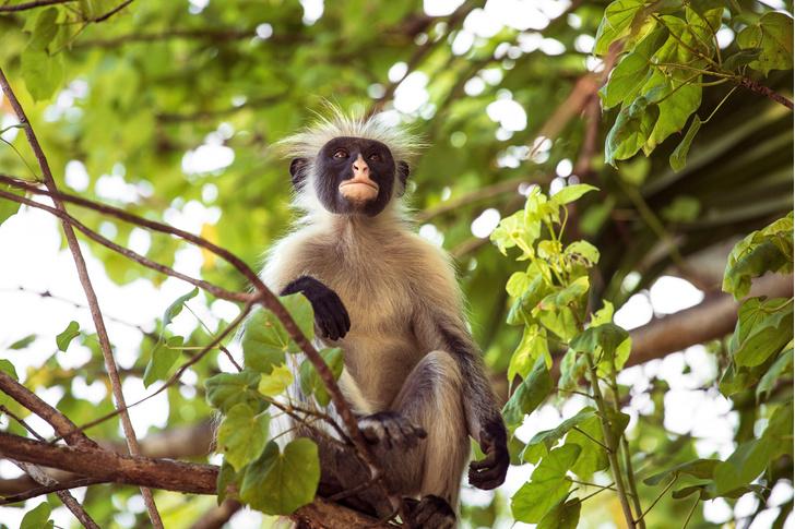 Фото №1 - Лежачие полицейские защитили редких приматов