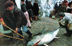 Фото №6 - Неспокойные Азоры