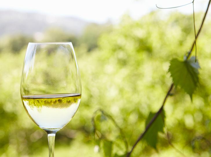Фото №1 - Зеленое вино: что такое Vinho Verde и почему оно такое редкое (у нас)