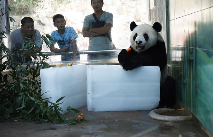 Фото №1 - Урок гедонизма от панды