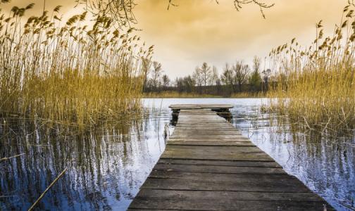 Фото №1 - В Петербурге нет пригодных для купания водоёмов. В Ленобласти их много