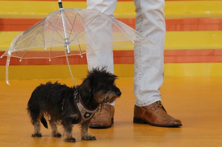 Фото №2 - Спастись от непогоды: 7 изобретений, помогающих укрыться от дождя