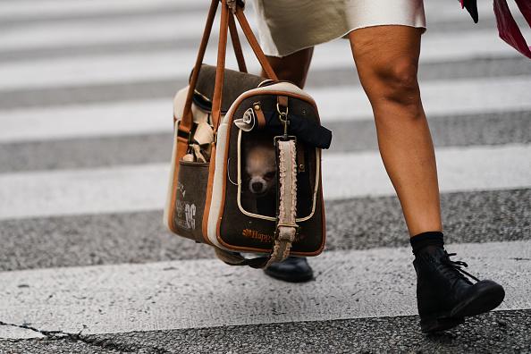 Фото №1 - Doggy Style: 6 нарядов для самых стильных питомцев