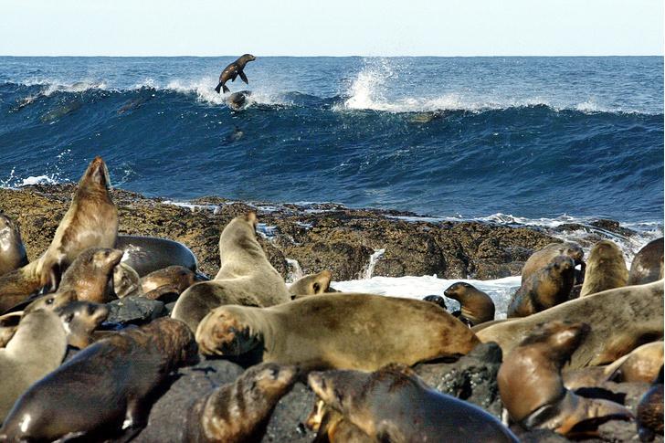 Фото №12 - Зоология: чей в море мех