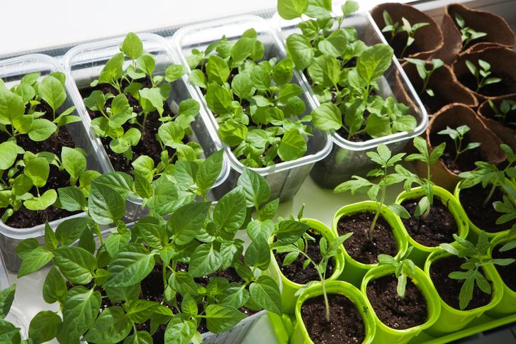 Фото №5 - Календарь садовода: что и когда сажать дома и на даче
