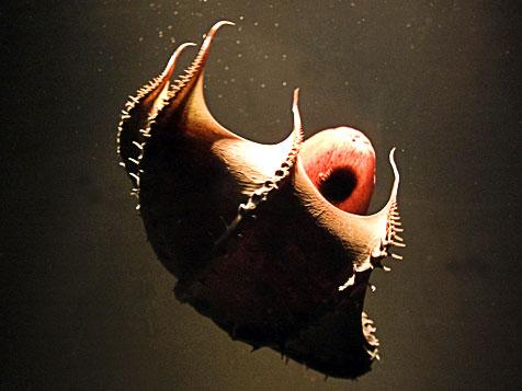 Фото №3 - Мифологические чудовища. Часть II