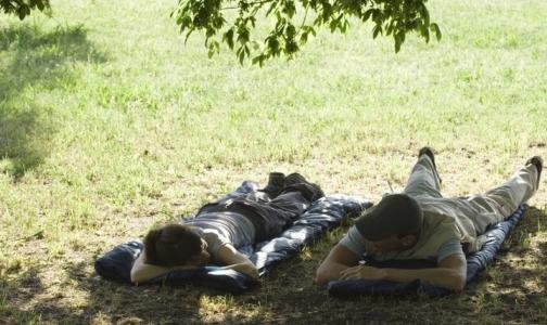 Фото №1 - Петербуржцы стали обращаться в больницу из-за клещей в 5 раз чаще