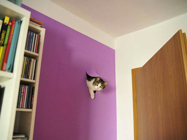 Фото №1 - 15 фотографий бардака и кошек, которые совершенно ни при чем