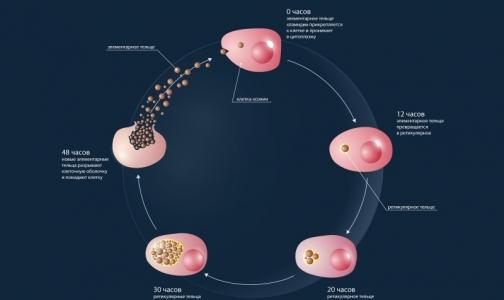 Фото №1 - Ученые нашли способ борьбы с хламидиозом
