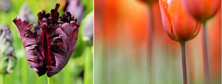 Фото №9 - Нескучный сад