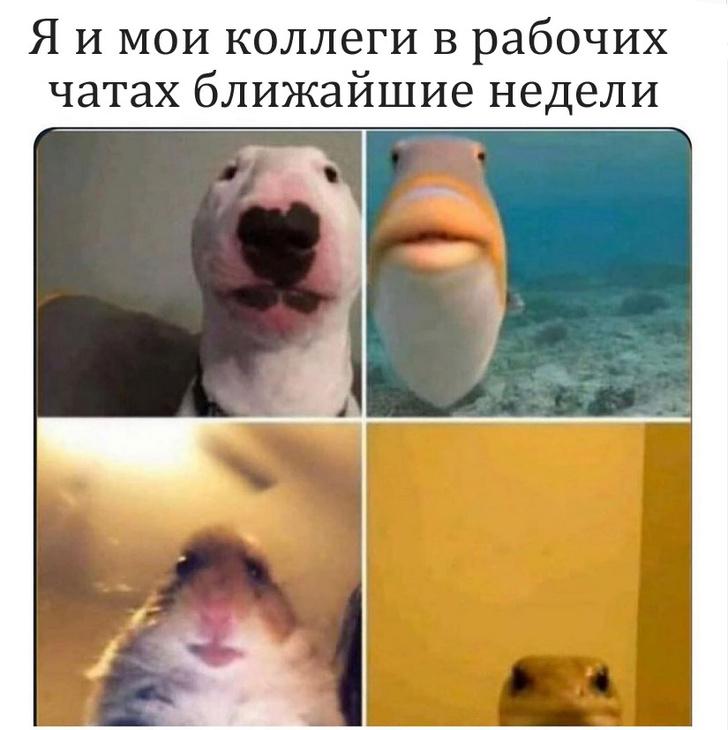 Фото №6 - Лучшие мемы про работу на удаленке из-за коронавируса