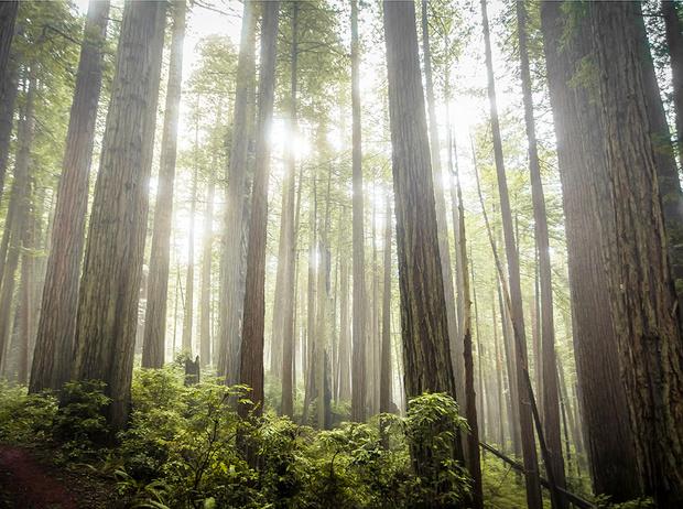 Фото №1 - Самые древние растения планеты