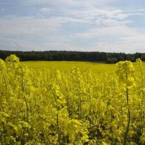 Фото №1 - Россия выпустит в Европу струю биотоплива