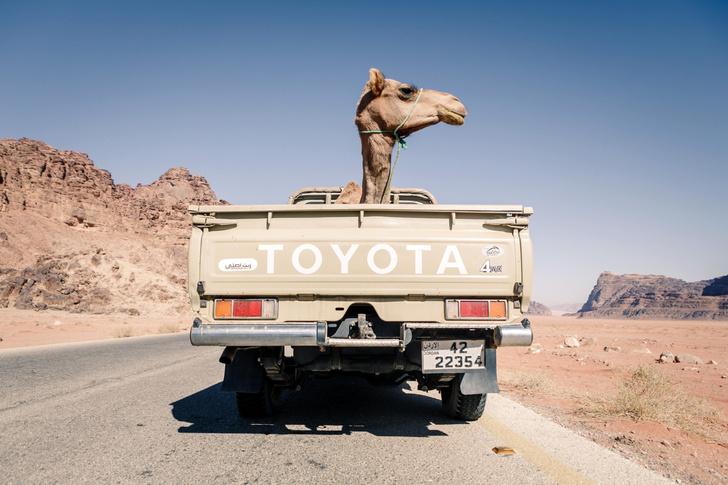 Фото №1 - Один кадр: Иордания
