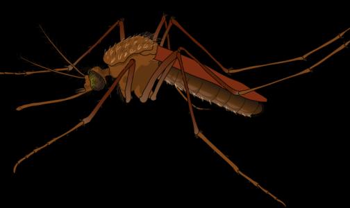 Фото №1 - «Спортсмены в опасности»: ученые рассказали, как комары выбирают жертв для укуса