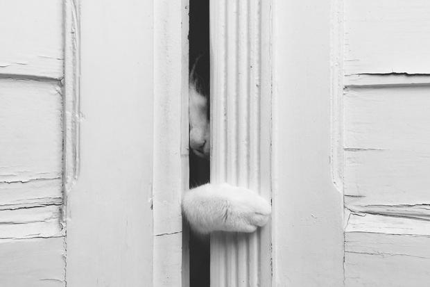 Фото №2 - Почему твой кот ненавидит закрытые двери?