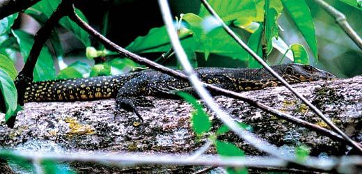 Фото №14 - Борнео, колыбель эволюции