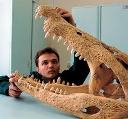 Фото №2 - Музей эволюции, или Консервация прогресса