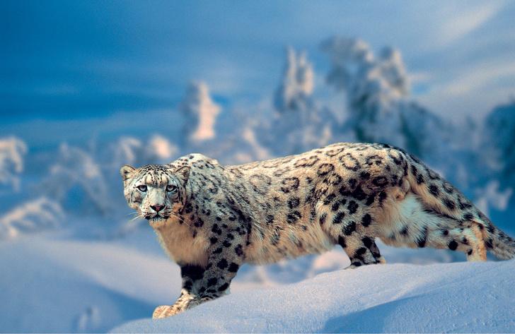 Фото №1 - Россия: дикая природа