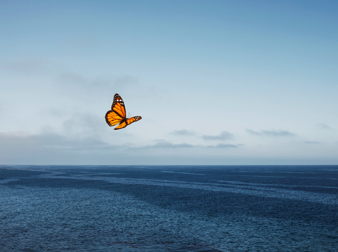 Фото №3 - Королева Виктория, Николай II и Гитлер: как «эффект бабочки» в их жизнях повлиял на ход истории