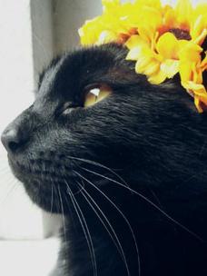 Фото №1 - Тест: Выбери черного котика и получи предсказание от Сабрины Спеллман
