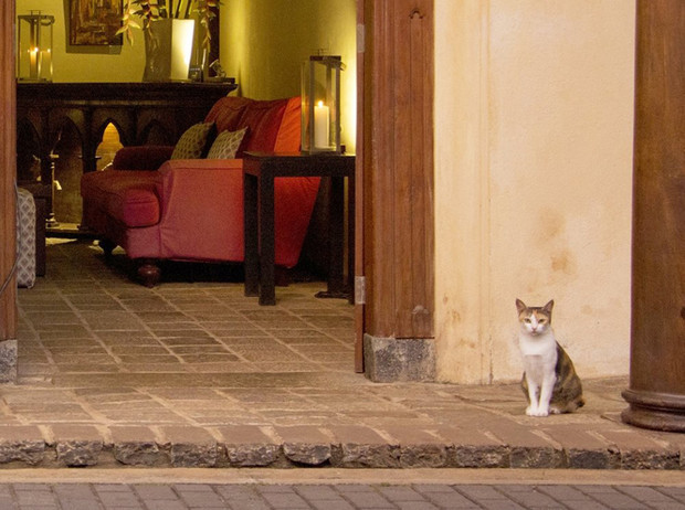 Фото №18 - Котики, вперед: отели, в которых на правах хозяев живет кое-кто еще