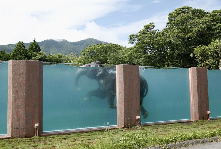 Фото №1 - Бассейн для слона