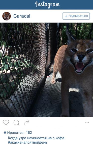 Фото №1 - Если бы у зверей был «Инстаграм»: 20 блогеров из зоопарка