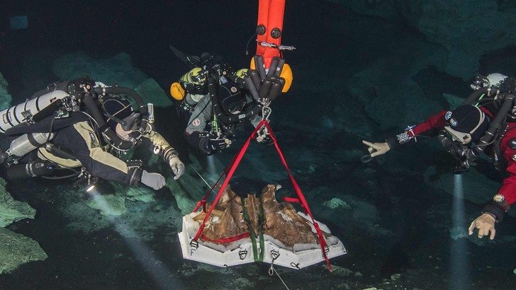 Фото №1 - Дайверы подняли останки гигантского ленивца из подводной пещеры
